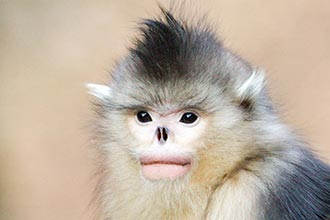 Primate Photography