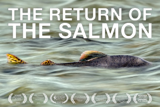 The Return Of The Salmon Video