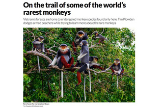 On The Trail Of Some Of The World's Rarest Monkeys