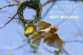 Capturing Behaviour: Nest-Building