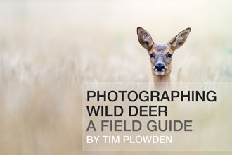 Photographing Wild Deer: A Field Guide