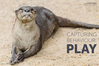 Capturing Behaviour: Play