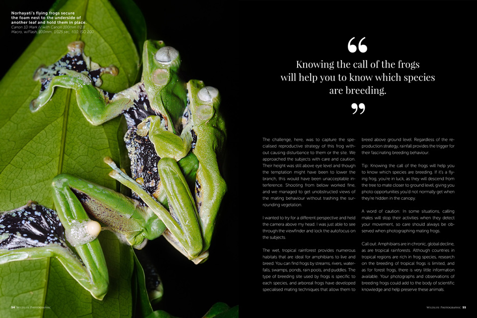 Article about photographing wildlife behaviour for May/Jun 2017 edition of Wildlife Photographic Magazine.