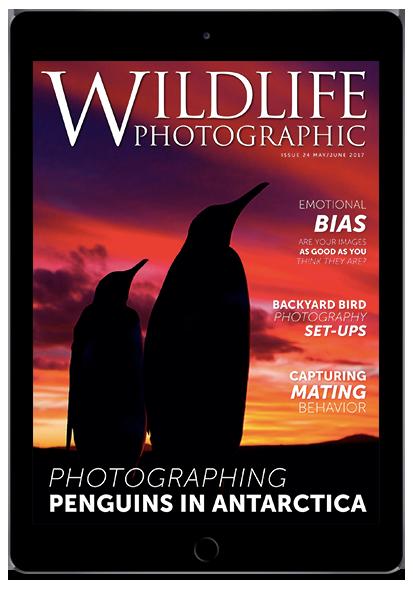 Wildlife Photographic Magazine Issue 24 May/June 2017 edition