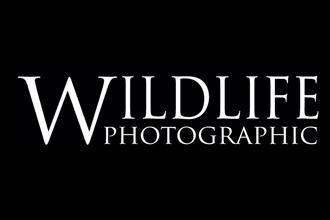 Wildlife Photographic