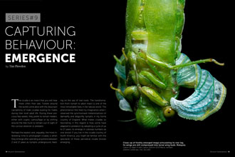 Article About Photographing Wildlife Behaviour For July/August 2017 Edition Of Wildlife Photographic Magazine.