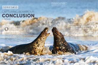 Article About Photographing Wildlife Behaviour For Sep/Oct 2017 Edition Of Wildlife Photographic Magazine.
